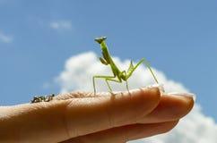 Praying mantis on a background stock photos
