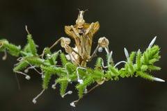 Praying mantis in the flower stock photo