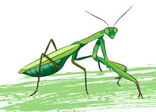 Praying mantis. Stock Images