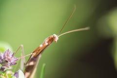 Praying Mantis III. Praying mantis waiting on the flower Royalty Free Stock Photo