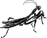 Praying mantis,  illustration Stock Image