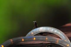 Praying Mantis Mantis Regligiosa Resting On LED Lighting Close Up royalty free stock photography