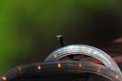 Praying Mantis Resting On LED Lighting Close Up stock photography