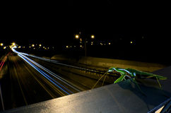 Praying Mantis in view of Limassol by night Royalty Free Stock Photography