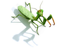 Praying mantis on white Stock Images
