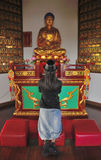 Praying to Buddha Royalty Free Stock Photo