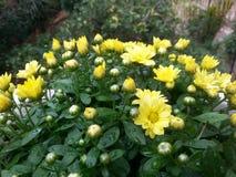 Prazer amarelo Imagem de Stock Royalty Free