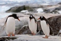Práctica de la danza del pingüino Imagenes de archivo