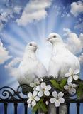 Précurseurs de l'amour chaleureux Photo libre de droits