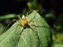 Prédateur jaune d'insecte Photo libre de droits