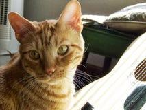 (Pre) кот Seranade киски Стоковые Изображения