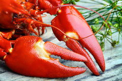 Pre-boiled crayfish Royalty Free Stock Image