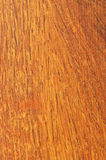 Pre-finished hardwood floor sample Royalty Free Stock Image