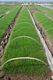 Pre-grown seedlings Stock Photos