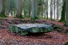 Pre-historic dolmen autumn forest, Hoegne, Ardennes, Belgium. Prehistoric dolmen and leafs on the ground, and beech trees in the nature reserve park of Hoegne in royalty free stock photo