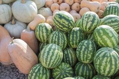 Pre-holiday colorful pumpkins and watermelons display at farmers market Royalty Free Stock Photos