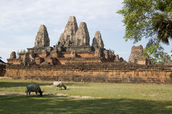 Pre Rup Temple with buffalo Stock Photography