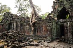 Preah khan Fotografia Stock Libera da Diritti