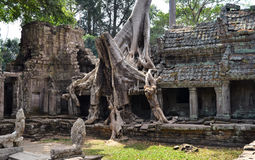 Preah khan cambodia Stock Images