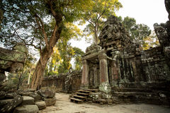 Preah Khan. Door with tree Royalty Free Stock Photo