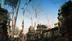 Preah Khan (het is vertaald als heilig zwaard van A) De bomen en de ruïnes van de tempel, Siem oogsten, Kambodja stock footage