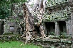 Preah Khan - la Cambogia Fotografie Stock Libere da Diritti