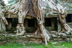 Preah khan Royalty Free Stock Photo