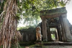 Preah Khan temple in Angkor Royalty Free Stock Photo