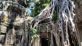 Ta Prohm Temple, Angkor, Siem Reap Royalty Free Stock Images