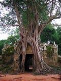 Preah Khan temple in Angkor Wat (Cambodia). Stock Image