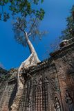 Preah Khan temple, Siem Reap, Cambodia stock photography