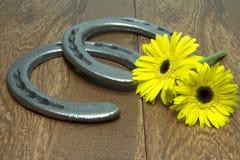 Preakness estaca Susans de olhos pretos com as ferraduras na madeira Imagens de Stock
