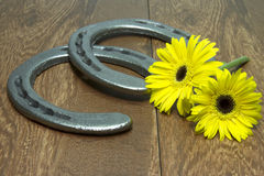 Preakness Stakes Black Eyed Susans with Horseshoes on Wood Stock Images
