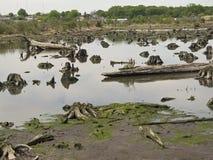 Precedente foresta Fotografie Stock Libere da Diritti