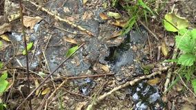 Precedente rifiuto tossico dello scarico, sintetico e dettaglio raffinato catrame dell'asfalto, verde della natura di effetti da  video d archivio
