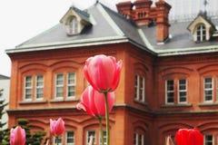 Precedente servizio governativo dell'Hokkaido con il tulipano su priorità alta, Sapp Fotografia Stock Libera da Diritti