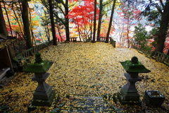 Precincts of autumn leaves Stock Images