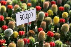 Precio de los potes coloridos del cactus Fotos de archivo libres de regalías