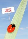 Precio del Ladybug fotos de archivo