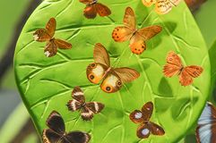 Precious butterfly species and collection. Butterfly collecting and rich variety royalty free stock image