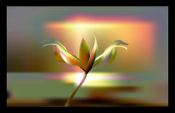 Precious Golden flower in hour of dawn. Lily delicate and fragile at Golden hours. Stock Photography