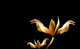 Precious Golden flower in hour of dawn. Lily delicate and fragile at Golden hours. Stock Photos