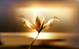 Precious Golden flower in hour of dawn. Lily delicate and fragile at Golden hours. Precious Golden flower in the hour of dawn. Lily Lilium delicate and fragile Stock Photo