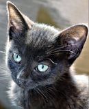 Sweet black kitten stock photos