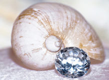 Precious marine snail house Stock Photography