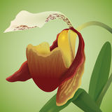 Precious Orchid Isolated, Vector Illustration Stock Image