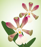 Precious Orchids Isolated, Vector Illustration Stock Photos