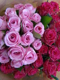 Precious pinks Royalty Free Stock Images