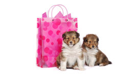 Precious Puppies Stock Photography