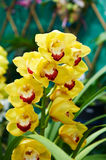 Preciousness orchid. The photo was taken in Hong Kong park Hongkong,China Stock Images